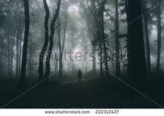 Floresta Negra Fotos, imagens e fotografias Stock | Shutterstock