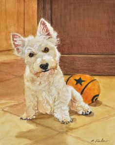 My newest dog print offering on Etsy. An adorable little scottish terrier I met and painted in watercolor with colored pencil.