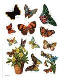 DoverPictura - Full-Color Decorative Butterfly Illustrations