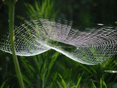 webs we weave Spider Silk, Spider Art, Spider Webs, Macro Photography, Levitation Photography, Winter Photography, Abstract Photography, Itsy Bitsy Spider, Charlottes Web