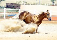 Gold Olena Pep TMR American Quarter Horse, Quarter Horses, Horse Coat Colors, Gypsy Horse, Equine Art, Palomino, Horse Photography, Snow Leopard, Westerns