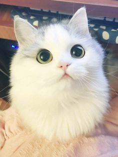 Fluffy Cat. http://ift.tt/2nXk6NA
