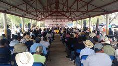 Otro de los componentes que se apoyan es el de fomento a la infraestructura agropecuaria así como la adquisición de sementales bovinos, vientres bovinos, ovinos, entre otros