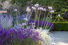 Garden Ideas, Landscaping ideas, Agapanthus africanus Albus, Agapanthus Northern Star, Agapanthus Silver Moon, Agastache Black Adder, Deschampsia cespitosa, Eryngium bourgatii, Lavandula angustifolia 'Hidcote', Perovskia atriplicifolia, Russian Sage, Mediterranean border