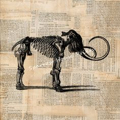 Woolly Mammoth Skeleton Print Vintage by SparrowHousePrints