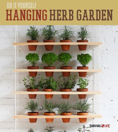 indoor survival garden | DIY Indoor Vertical Herb Garden -By Survival Life Contributor on April ...
