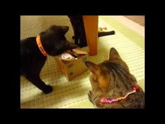 Kitten VS cat money box