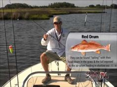 Topwater Redfishing Tips and Techniques - http://catchfishvideos.com/topwater-redfishing-techniques