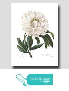 "White Peony Art Print (French Home Decor, Antique Room Decor) --- ""Peony Flower by Pierre Redoute"" No. 102, Botanical Wall Art from Cloud Nine Prints https://www.amazon.com/dp/B0181KMIRS/ref=hnd_sw_r_pi_dp_RE0WxbV58A33N #handmadeatamazon"