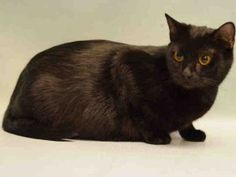 PREGNANT - LAKE IS 4 YRS OLD AND IN LATE STAGE OF PREGNANCY - NEEDS OUT NOW!