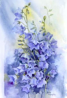 Watercolor Painting By : Rachel Mcnaughton Canterbury Bells