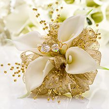 """""""Gold Rush"""" 