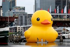 World's largest duck in Sydney