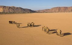 Travel - African Travel Company For Great African Safaris & Holidays Land Of The Brave, Elephant Love, Seaside Towns, Travel Companies, African Safari, Photos, Pictures, Trip Planning, Mammals