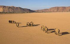 Desert Elephants @ Damaraland Namibia