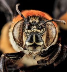 25 of the Best Close Ups of Insect Eyes You Will See