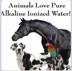 #Animals #Hydration #Hydrate #Healthy #water SharePurpleWater.com