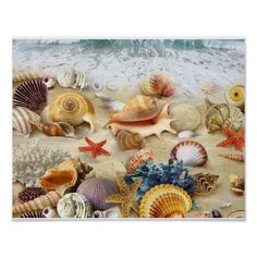 Underwater World Sea Animal Starfish Seashells Bedroom Living Room Art Wall Hanging Tapestry Inch Seashell Shower Curtain, Shower Curtains, Starfish Art, Seashell Art, Beautiful Posters, Poster Prints, Art Prints, Living Room Art, Tapestry Wall Hanging