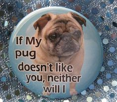 If my pug doesn't like you, neither will I #pugs