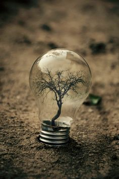 I love how the light bulb fits perfectly around that beautiful tree                                                                                                                                                                                 More