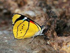 #butterfly 45