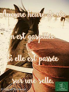 L'equitation une vie ❤