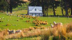 The Shepherd's Cottage, a restored century-old one bedroom farmhouse on a New Zealand farm.   www.facebook.com/SmallHouseBliss