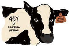 Wrangling the Climate Impact of California Dairy   Civil Eats
