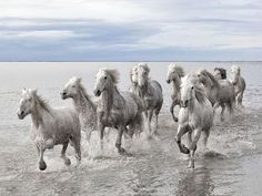 Wild Horses, France  Photograph by Marco Carmassi