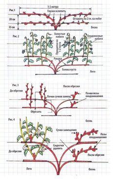 Фотография Garden Design Plans, Vegetable Garden Design, Garden Tools, Shade Garden, Garden Plants, Brick Wall Decor, Espalier Fruit Trees, Tree Surgeons, Farm Layout