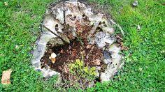 Incluso muerto el árbol,  su tronco sigue albergando vida