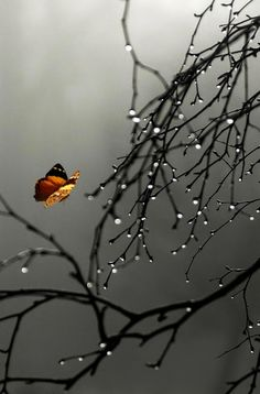 Explore amazing art and photography and share your own visual inspiration! Rain Wallpapers, Cute Wallpapers, Wallpaper Backgrounds, Rain Photography, Creative Photography, Amazing Photography, Still Life Photos, Beautiful Nature Wallpaper, Nature Pictures