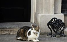 Larry the Downing Street cat sits outside Number 10, in London