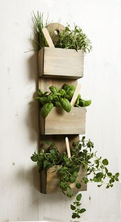 Wall Mounted Wooden Kitchen Herb Planter Kit with Seeds Indoor Garden Plant Pot in  | eBay!