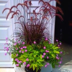 Purple feather grass, wave petunias and some sort of vine.  Could us sweet potatoe vine