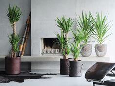 Planten mee verhuizen?