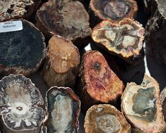 Madagascar petrified wood