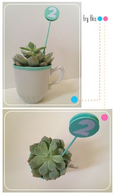 precious table numbers using tea cup & succulent (or maybe some other type plant.)