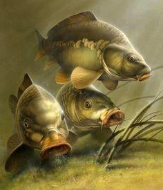 Koi Carp by Koryaba Carp Fishing Tips, Gone Fishing, Trout Fishing, Fishing Knots, Fishing Lures, Wildlife Paintings, Wildlife Art, Kobra Tattoo, Carp Tattoo