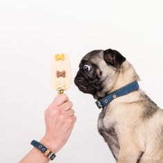 dogs photography Paul's Homemade Ice Cream studio dog photography in collaboration with Friendship Collar South Africa Little Dogs, Big Dogs, Cute Dogs, Pug, Friendship Collar, Dog Shots, Best Dog Photos, Dog Modeling, Dogs Golden Retriever
