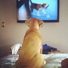 Dog Show.