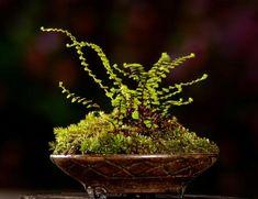 Beautiful kusamono ferns