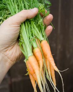 Catch-up Gardening: Overcoming Failures in the Garden..... You've done your planning, you know what you're going to grow and where you're going to grow it, you're poised and ready to plant – but then…somehow…you fall behind.