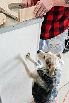 Stop dog bowls from sliding around the floor with this easy DIY dog food and water bowl stand made from wood. Dog Food Bowl Stand, Dog Food Stands, Dog Food Bowls, Natural Pet Food, Wood Dog, Diy Stuffed Animals, No Cook Meals, Dog Food Recipes, Pets
