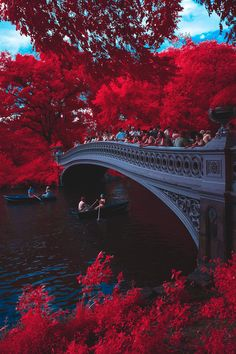 Bow Bridge, Central Park by Brooklyn Born  New York City Feelings  The Best Photos and Videos of New York City including the Statue of Liberty, Brooklyn Bridge, Central Park, Empire State Building, Chrysler Building and other popular New York places and attractions.