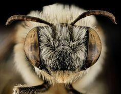 25-closes-em-olhos-de-abelhas-23.jpg (1200×940)