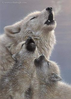 Singing Lessons – Wolf Puppies – Winter Animals – Amazing Ideas and Photography. Beautiful Wolves, Beautiful Dogs, Animals Beautiful, Animals Amazing, Beautiful Creatures, Rare Animals, Animals And Pets, Strange Animals, Wild Animals