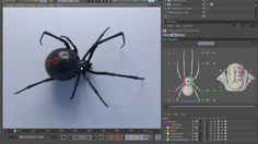 This is a preview of a realistic model of Black widow spider or Latrodectus mactans for Cinema 4d v16 and up. Anatomically correct, fully rigged, animated, textured and ready to render with Corona render. Available here: https://www.cgtrader.com/3d-models/animals/insect/blak Model comes with intuitive and clean rig with visual selector and parametric animation features. It is rigged with powerful Character object using custom components. Rig has a separate 'SHADOW' hierarchy of deformatio...