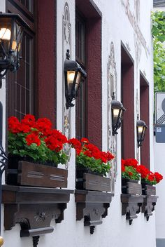 Windows, Lamps, Flowerboxes