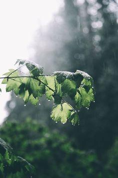 hannahkemp: Rainy Days : expressions-of-nature Rainy Day Photography, Hiking Photography, Landscape Photography, Nature Photography, Aesthetic Photography Nature, Outdoor Photography, White Photography, Spring Aesthetic, Nature Aesthetic